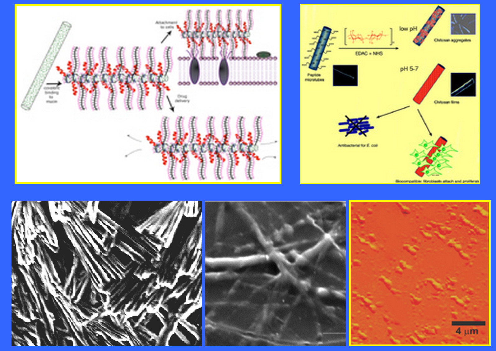 Overview of biomedical nanotechnology