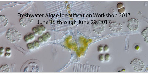 Freshwater Algae Identitification Summer Workshop 2017 Freshwater algae