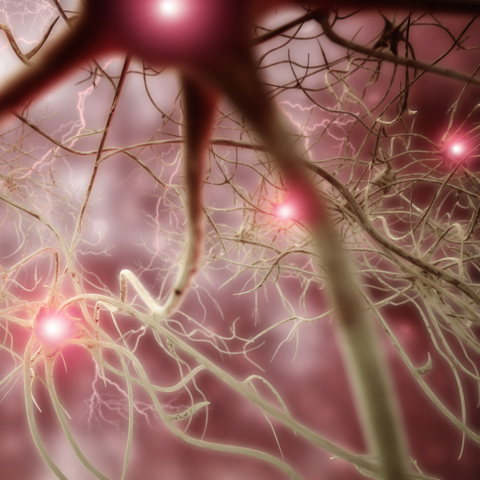 Stock illustration of nerve synapses - LG